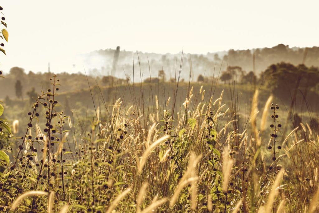 Pour le développement de l'agriculture biologique